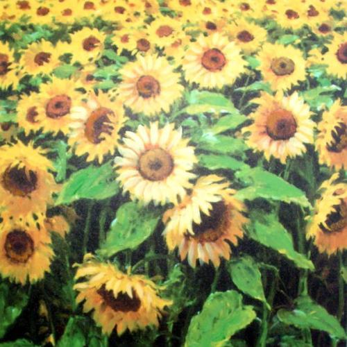 Obraz na zeď Lán Slunečnic