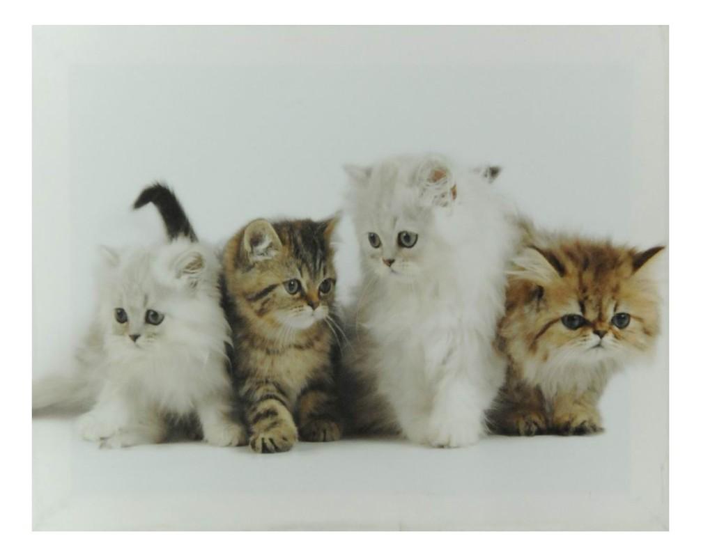 Obraz a plátně Koťátka