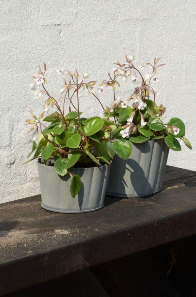 Plechový květník Grooves