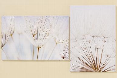 Obraz na plátně Pampeliška 1+1 za výhodnou cenu
