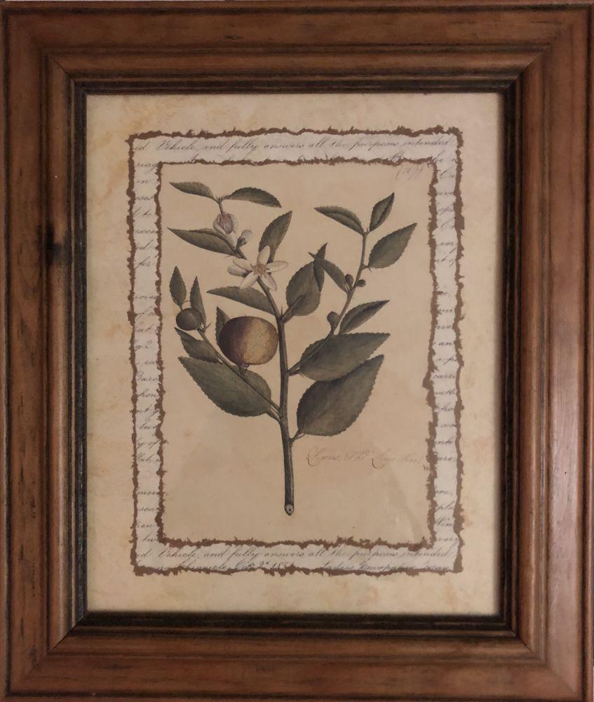 Obrázek na zeď v dřevěném rámu Citron