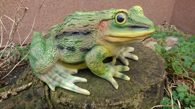 Žába skokan zelený