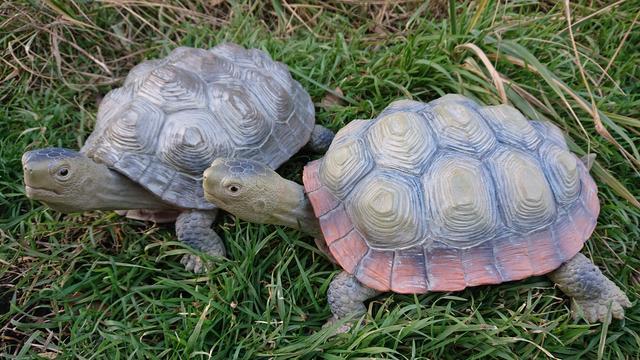 Želva s červeným okrajem dekorace na zahradu