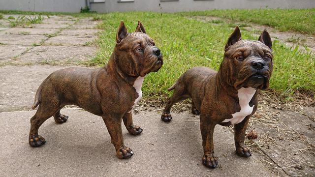 Dekorace na zahradu pes Pitbull